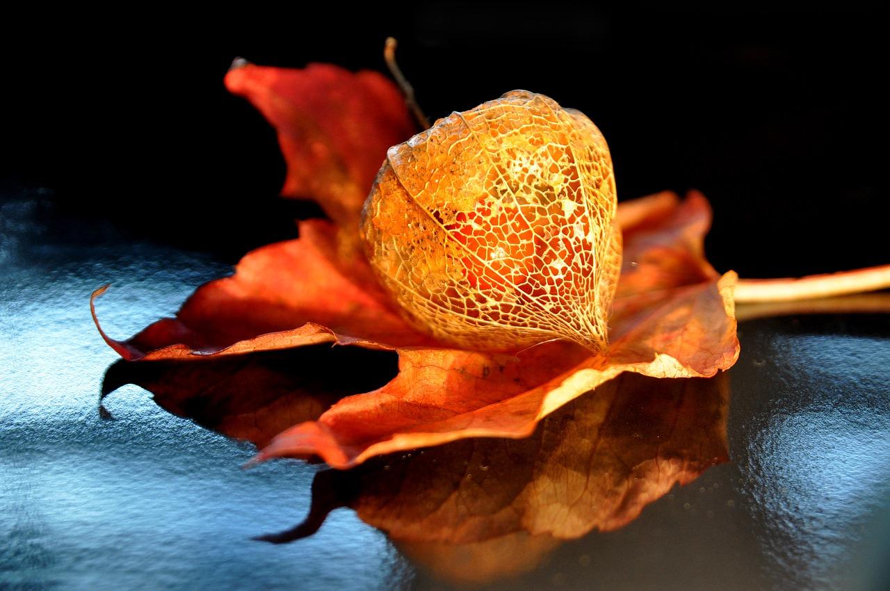 autumn-1713232_1280