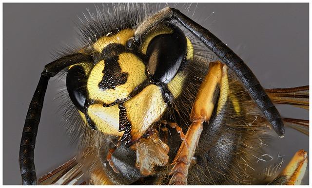hlava včely.jpg