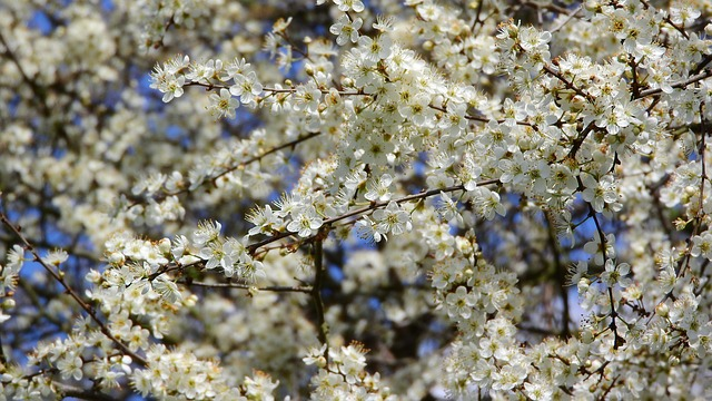 jarní květy.jpg