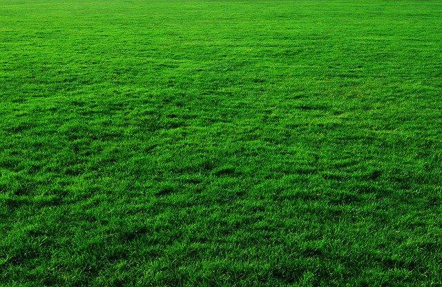 zelená plocha trávníku